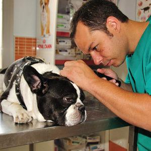 Consulta y diagnóstico veterinario